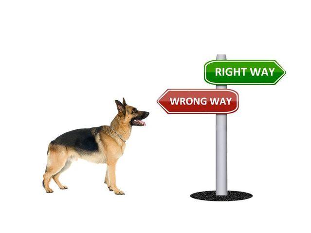 Нужно ли говорить собаке, что она ошиблась?