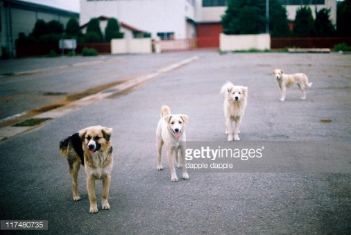 Чарли: путь от боязливого дичка к домашней собаке