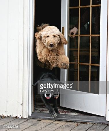 Импульсный контроль. 6 секретов обучения собак спокойствию и вежливости
