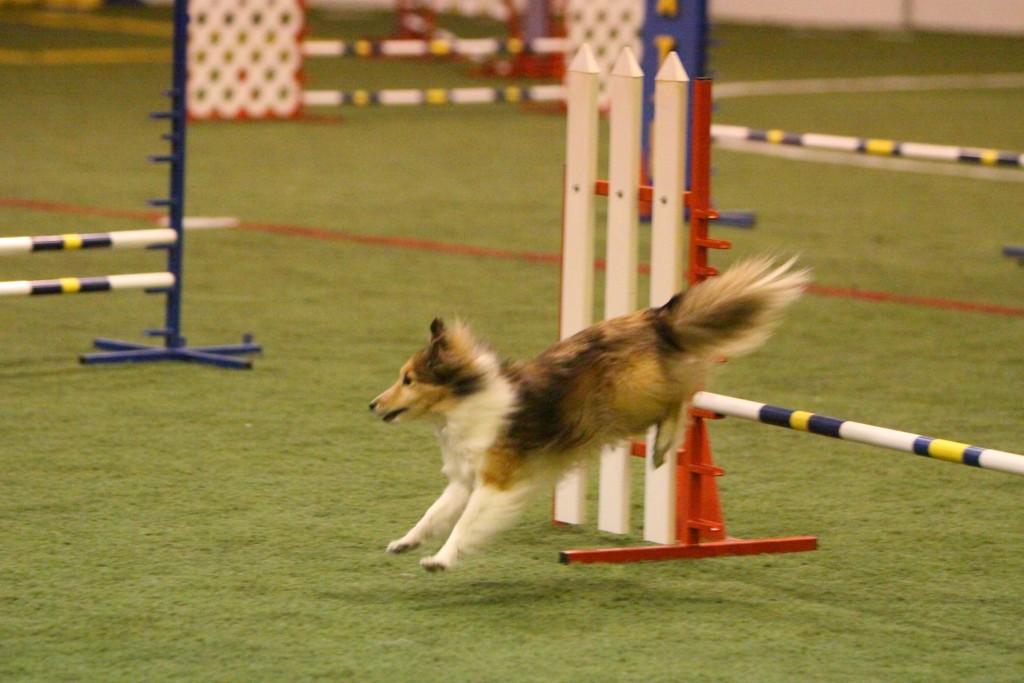 Зачем активной собаке хвост