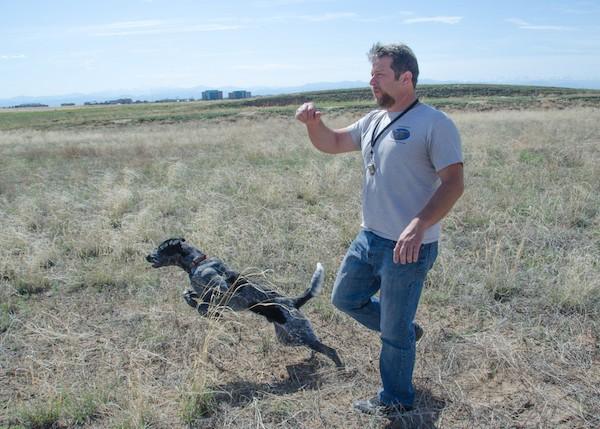 Можно ли обучить охотничью собаку без ЭШО?