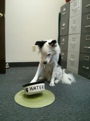 Как животные дрессируют нас