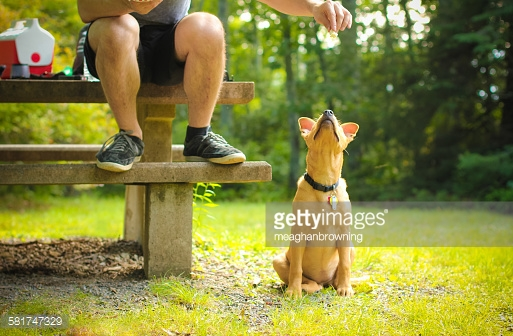 Но собаки-родители не дают лакомств…