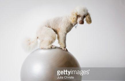Комплексная физподготовка собак: баланс, сила и выносливость вашей собаки. Часть 5