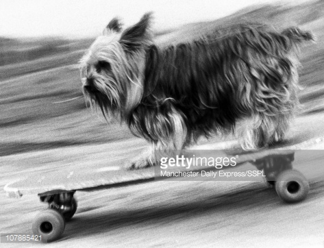Комплексная физподготовка собак: баланс, сила и выносливость вашей собаки. Часть 3