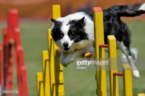 Комплексная физподготовка собак: баланс, сила и выносливость вашей собаки. Часть 2