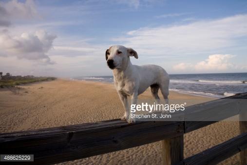 Комплексная физподготовка собак: баланс, сила и выносливость вашей собаки. Часть 1