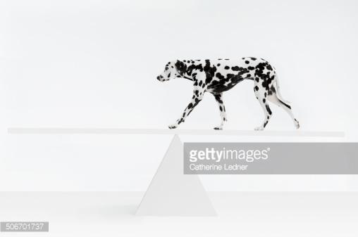 Комплексная физподготовка собак: баланс, сила и выносливость вашей собаки. Часть 4