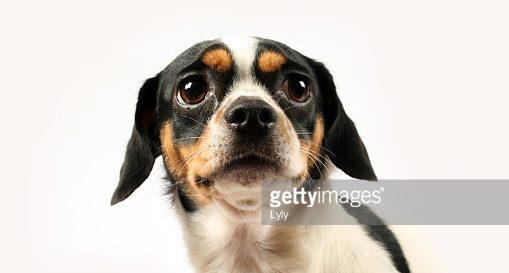 Страх и агрессия у собак родственны тревожности человека