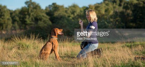 Почему сегодня вам НЕ надо разговаривать с собакой