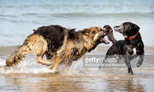 Гиперактивность в крови у собак