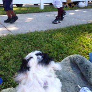 Знакомство с миром (Пятый урок для щенка)