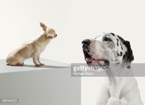 Доминирование у собак: последние новости