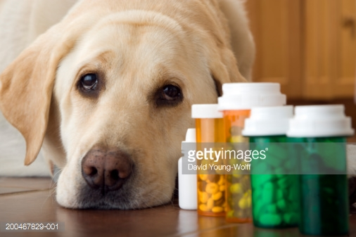 Чем животные могут заразиться от человека