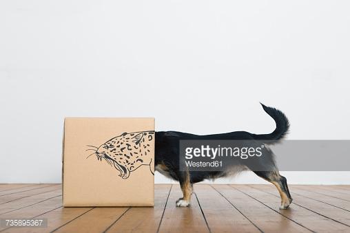 Возможно, вазопрессин делает собак агрессивными