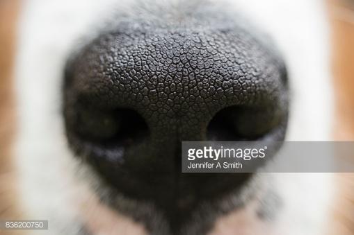 Собаки чуют ваш страх