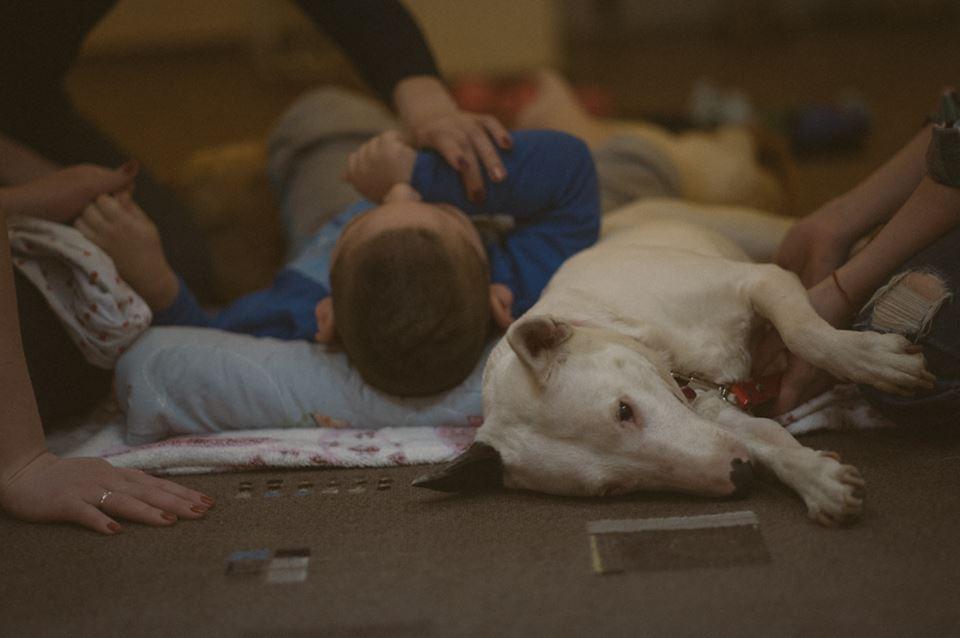 Стресс у собак-терапевтов