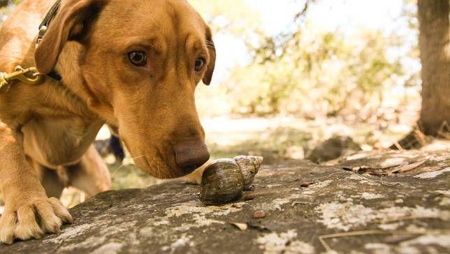 Как собаки сохраняют биоразнообразие планеты