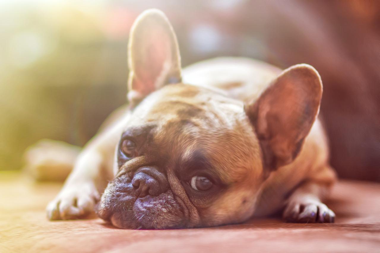 Страдают ли животные от скуки?