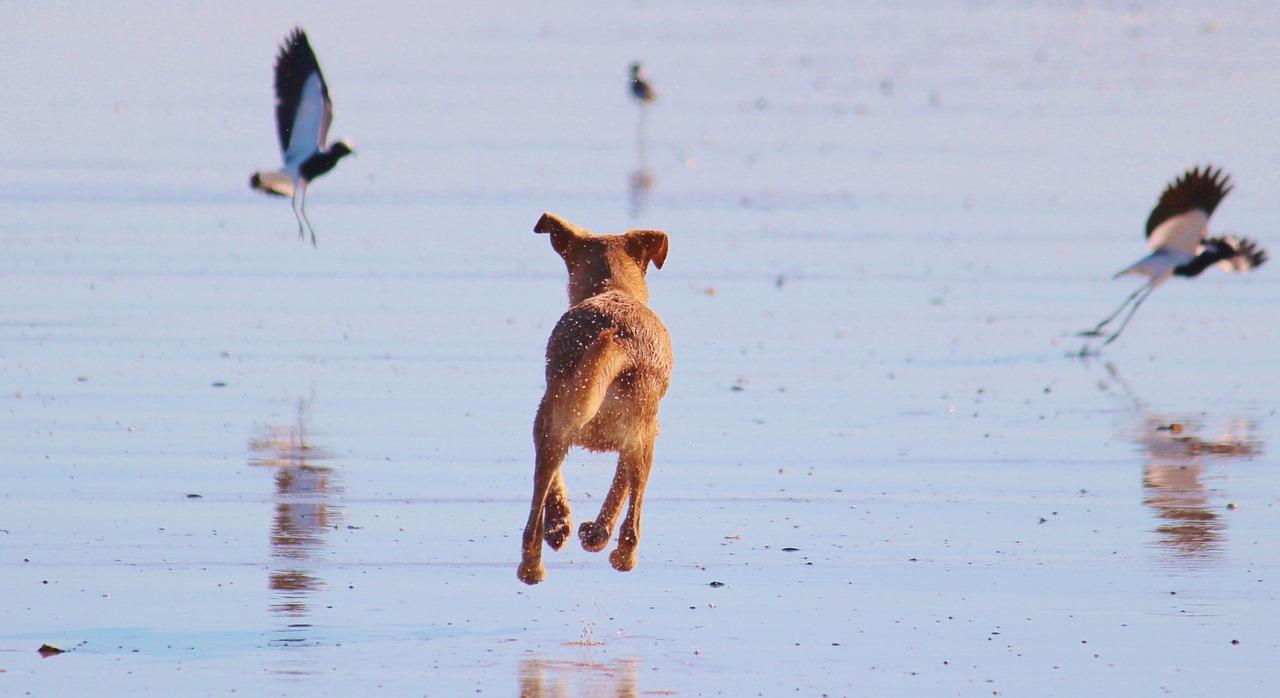 Ответственность хозяина, собаки и природа