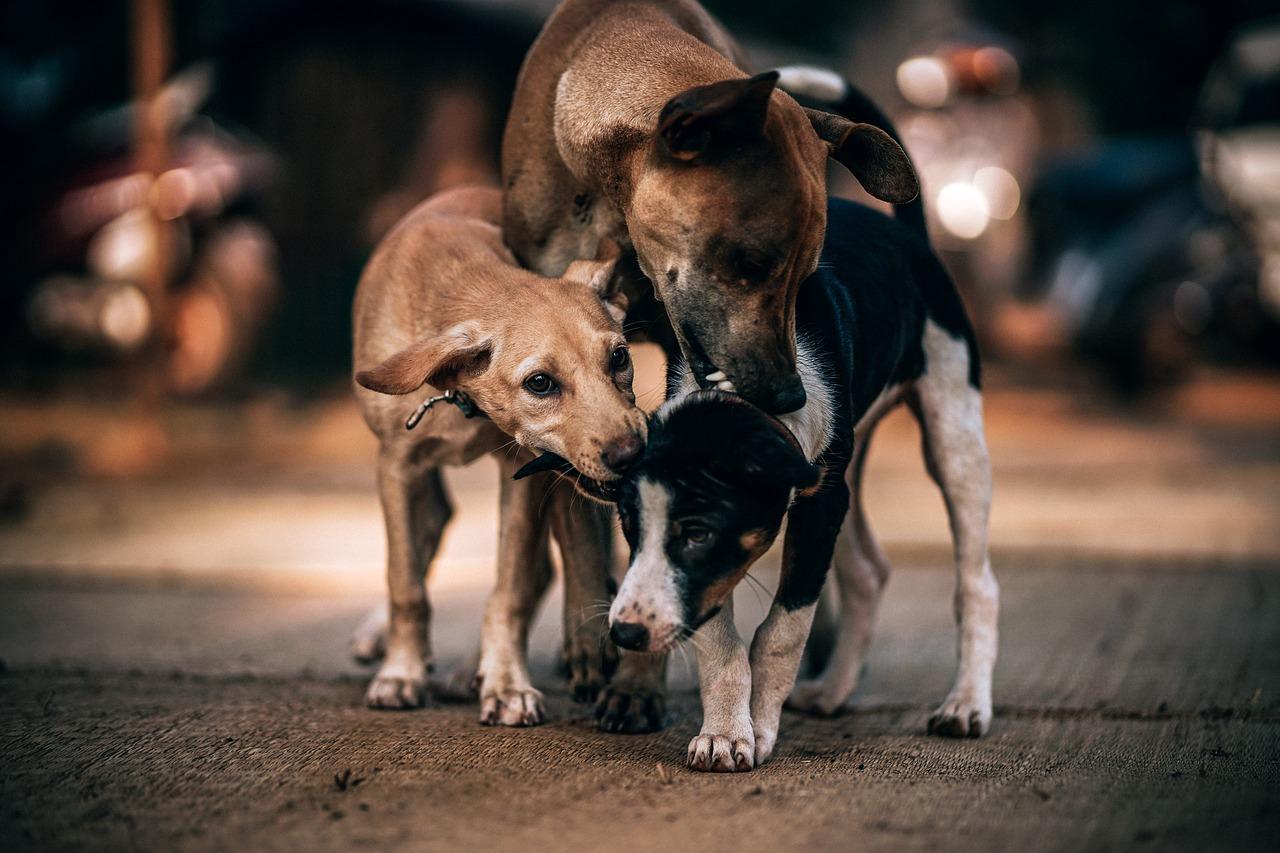 Сколько живут уличные собаки (и кошки)?