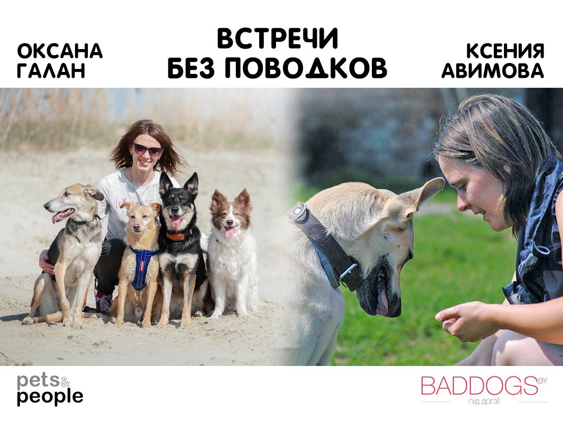 Встреча без поводков №5 | Чему нас учат плохие собаки