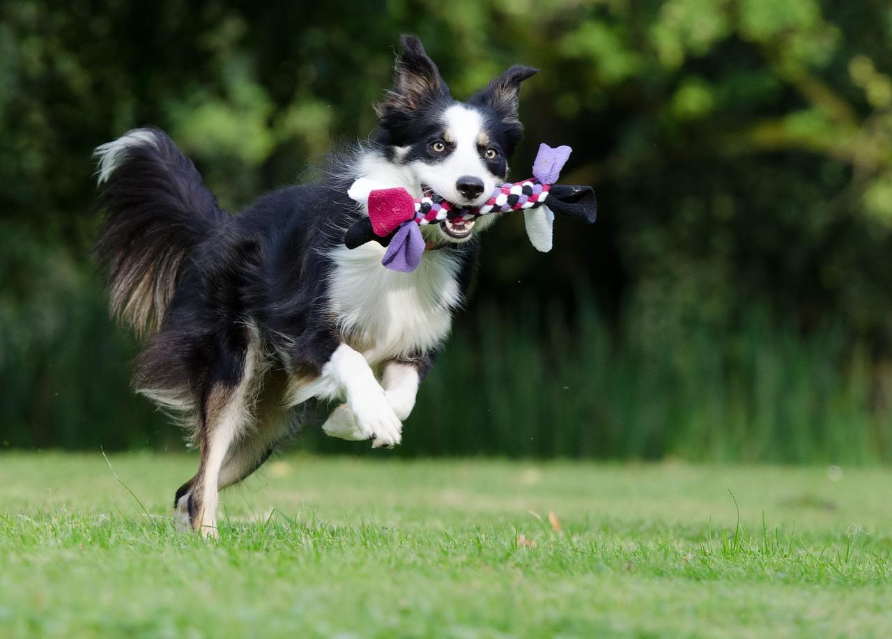 8 состояний собаки
